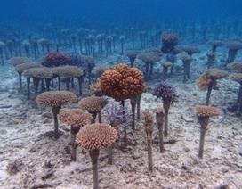 Lập hồ sơ DNA để bảo vệ san hô