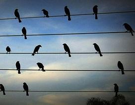 Kỳ lạ những chú chim biết sáng tác nhạc
