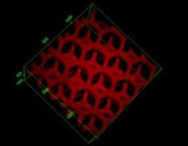 Thiết bị in 3D giống gan có thể khử độc máu