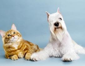 Mèo có thông minh hơn chó?