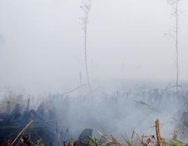 Tạm giữ 2 nghi can trong vụ cháy 10ha rừng U Minh Hạ