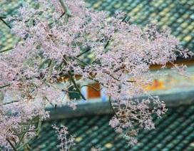 """Ngắm """"kỳ hoa dị thảo"""" chỉ có ở Huế"""