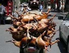 Báo Anh viết Việt Nam lột da chó làm... găng tay