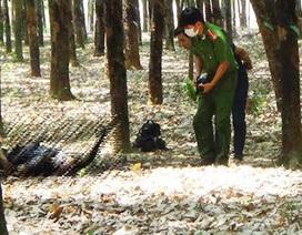 Người đàn ông chết cháy trong rừng cao su