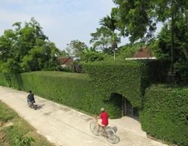 Mê mẩn những chiếc cổng xanh mướt ở làng quê Tùng Ảnh