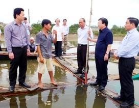 Vụ cá chết hàng loạt ở miền Trung:  Có thể hợp tác quốc tế để tìm nguyên nhân