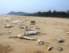 Thảm họa môi trường biển: Chỉ một người nhận kỷ luật khiển trách!