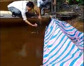 Nước sông bất ngờ đổi màu, xuất hiện cá chết