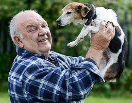 Chú chó bị trộm tái ngộ chủ sau 7 năm