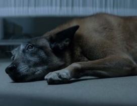 """Clip """"tình cảm của chó dành cho chủ"""" gây cảm động Internet tuần qua"""