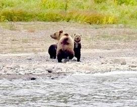 Cảm động khoảnh khắc gấu con chia tay mẹ để bắt đầu cuộc sống tự lập