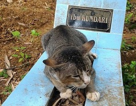 Cảm động mèo trung thành quyết không rời khỏi mộ chủ suốt một năm