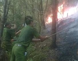Nhóm trẻ đốt lửa bắt ong làm cháy gần chục ha rừng?