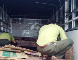Gần 2 tấn gỗ lậu bị bắt giữ trên đường đi tiêu thụ