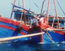 Vụ tàu thanh tra đâm tàu cá: Không phải cố ý?