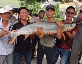 Bắt được cá măng lớn chưa từng có tại Hải Phòng