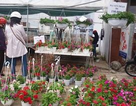 Mai, quất ít người mua vì giá cao, hoa rẻ tiền lên ngôi