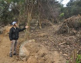 Được trả công gần 200 nghìn mỗi ngày để... phá rừng
