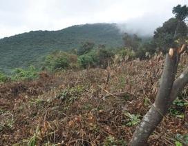 """Chủ tịch Đà Nẵng """"lệnh"""" xử nghiêm vụ xâm hại rừng Sơn Trà"""