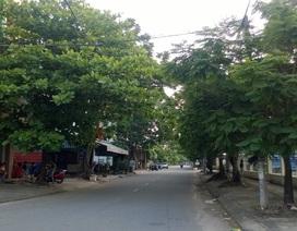 Đà Nẵng tính chuyện mua bảo hiểm cho cây xanh