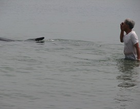 Cá lớn mắc cạn, bơi dọc bờ biển Đà Nẵng