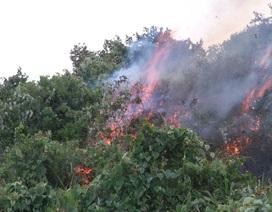 Lại cháy rừng Nam Hải Vân
