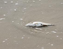 Đà Nẵng hỗ trợ 1,9 tỷ đồng cho ngư dân bị ảnh hưởng do ô nhiễm biển
