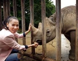 Thu Minh đưa tê giác từ Châu Âu về với thiên nhiên hoang dã Châu Phi