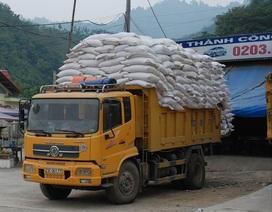 """Thủ tướng """"lệnh"""" giải cứu hàng ngàn tấn gạo ùn tắc ở cửa khẩu"""
