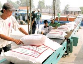 Xuất khẩu gạo: Rủi ro cao khi xuất đường tiểu ngạch