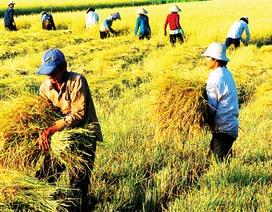 """Nông nghiệp đang """"kìm"""" đà tăng trưởng kinh tế"""