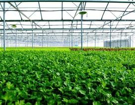Vingroup khởi công nhà kính đầu tiên trồng nông sản sạch