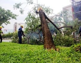 Hàng loạt cây xanh bật gốc sau trận mưa lớn ở Sài Gòn