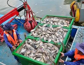 14 tấn cá chết sau cơn mưa đầu mùa ở TPHCM