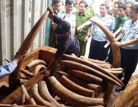 Phát hiện ngà voi, vảy tê tê được cất giấu tinh vi trong 2 container gỗ