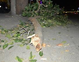 Cành cây cổ thụ rơi trúng 2 người đi xe máy