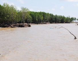 Xử nghiêm hành vi xâm hại rừng phòng hộ ven biển