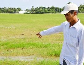Nông dân thiếu nước tưới, chính quyền vào cuộc thiếu kiên quyết?
