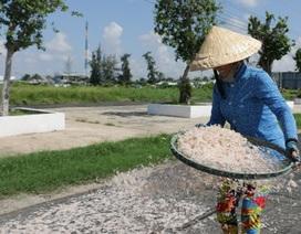 Ngư dân Bạc Liêu trúng mùa ruốc biển