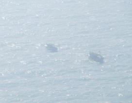 Tàu cá bị sóng nhấn chìm, 4 ngư dân rơi xuống biển
