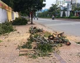 Dân sốt ruột chứng kiến hàng trăm cây xanh bị cưa sát gốc