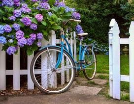 """""""Biến hóa"""" để hàng rào quanh nhà trở nên bắt mắt"""