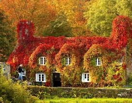 Cảnh sắc thiên nhiên đẹp nao lòng khi đất trời vào thu