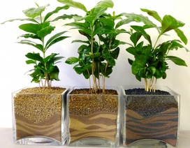 10 loại cây cảnh mang đến không khí hoàn hảo cho ngôi nhà của bạn