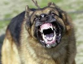 Nên làm gì khi bất ngờ bị chó dữ tấn công?