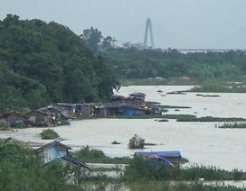 Bãi giữa sông Hồng ngập trắng vì nước lớn, xóm chài dạt vào bờ