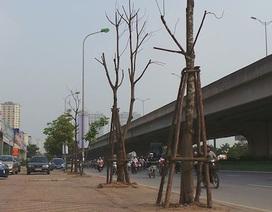 Hà Nội: Hàng cây chết khô trên đường Phạm Hùng, Khuất Duy Tiến