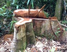"""Làm đường tuần tra, phá rừng đặc dụng: Liệu có """"lệch pha"""" giữa những văn bản tận thu?"""