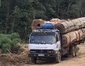 """Bài 2: Xe chở gỗ Lào """"bức tử"""" cung đường biên giới"""