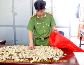 Bắt vụ tàng trữ gần 700 móng vuốt hổ?